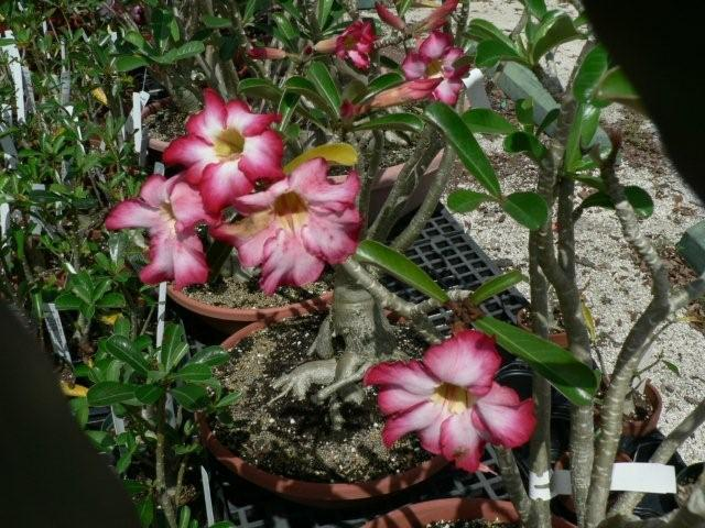 Unique Plants For Sale In Citrus County Nursery Giant
